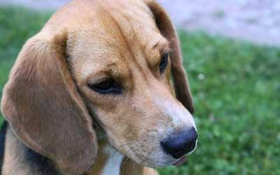 Hund: Erbschaft inklusive Tierpflege / Quelle: Fotolia