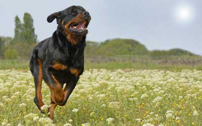 Hund: Artgerecht kommunizieren, Angriffe verhindern / Quelle: Fotolia