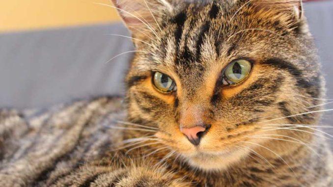 Mietrecht Wonrecht Für Hunde Und Katzen Daily Paragraph